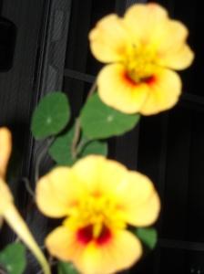 Hummingbird Tanka