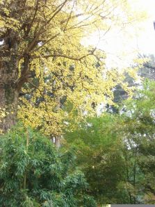 Gold Ginkgo and Bamboo
